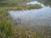 A village back-swamp close to B. Koua in Sangthong District in December 2011