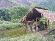 An integrated pig-fish system. The waste pig food and dung from the livestock unit enters the pond to stimulate primary production and supplemental food for fish production. Photo taken along the Nam